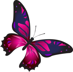 butterfly colorful pink blue | Artistshot