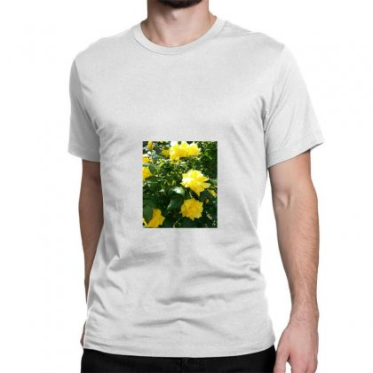 Yellow Roses In A Bush Classic T-shirt Designed By Thoughtcloud