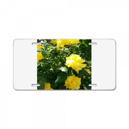 Yellow Roses In A Bush License Plate Designed By Thoughtcloud